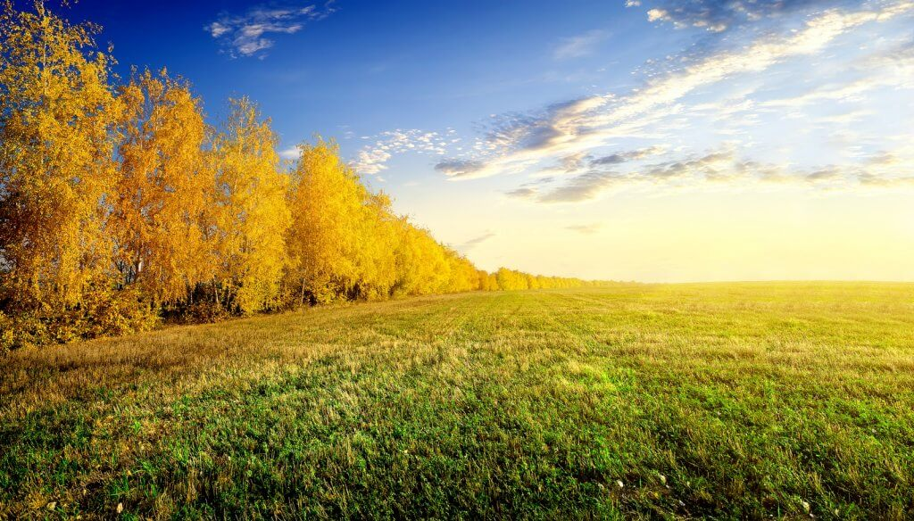 Birch trees on edge of land
