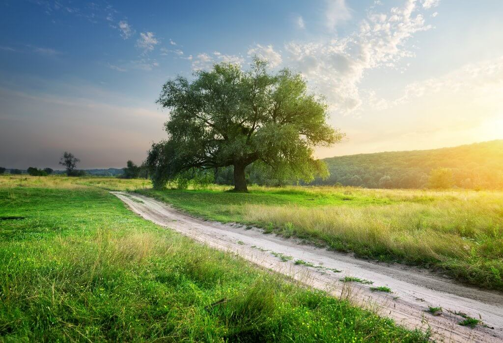 Footpath through land